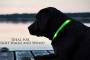 Keep Your Furry Friend Safe & Visible with an LED Pet Collar for Just $14! Valued at $30. Choose from 5 Colours! Great for Evening Walks