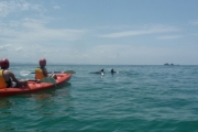 HEADING TO BYRON? Enjoy an Unforgettable Dolphin Kayak Tour for Just $32! Worth $65. Paddle Amongst Dolphins, Whales & Turtles!
