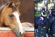 30-Minute Kids Pony Lead in Centennial Park Including Safety Equipment and Instruction for Just $24! Valued at $55. Centennial Park